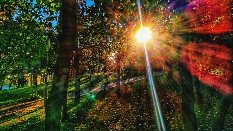 No People Nature Tree Sun Outdoors Growth Beauty In Nature Sunlight Low Angle View Sunset Day Sky Rainbow Colors Morning Colours Autumn Leaves Lake View Landscape Romantic Landscape Gold Colored Majestic Autumn Colours Tree Scenics Morning View Grass