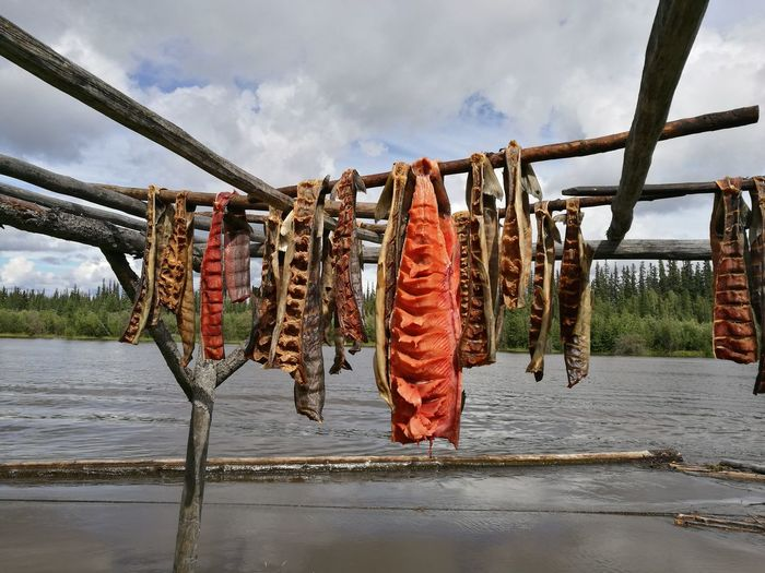 Fish drying on wood by river against cloudy sky