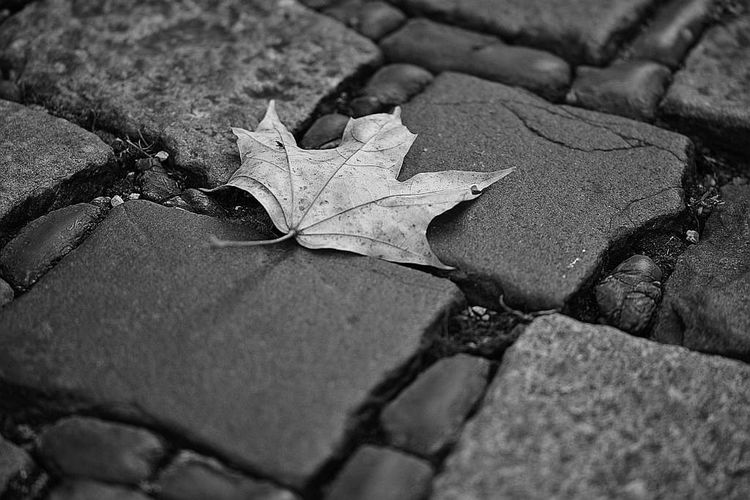#leaves #bnw #nikonshot #iphone #minimalistic #nature #myphoto #photography #photos #pics #pictures # Autumn Day Leaf Nature No People Outdoors