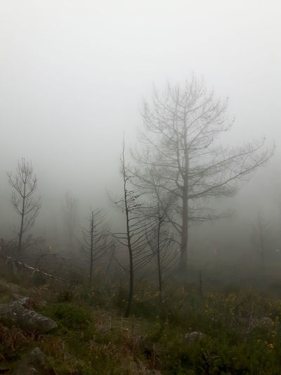 Fog Tree Plant Beauty In Nature Tranquility Land Tranquil Scene Environment Nature Sky No People Landscape Scenics - Nature Forest Hazy  Non-urban Scene Outdoors Day Winter Mistic Misty Mist Misty Morning Misterious Mistery Burnt Pine Tree