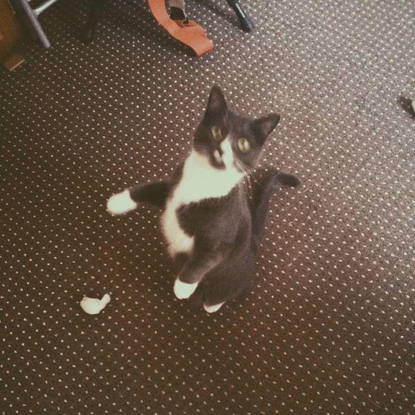 What, me? Catsofinstagram Snuglife Eastlondon