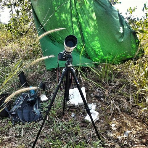 Birding Pagi ini, fotografer takut panas juga Samyang Manfroto Asuszenfone2