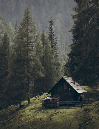 Small cabin in the forest in austria Nockalmstrasse Tree Plant Architecture Built Structure Land Building Exterior Mountain Forest Nature Landscape Building Hut No People House Tranquil Scene Tranquility Log Cabin Wood - Material Beauty In Nature Scenics - Nature Outdoors Cabin Pine Tree Cottage