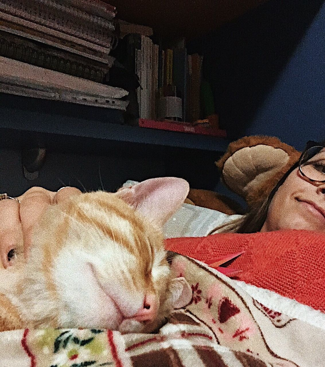 domestic, pets, domestic animals, mammal, animal themes, animal, relaxation, one animal, vertebrate, sleeping, feline, cat, resting, indoors, domestic cat, furniture, eyes closed, canine, dog, lying down, no people, whisker, animal head, napping