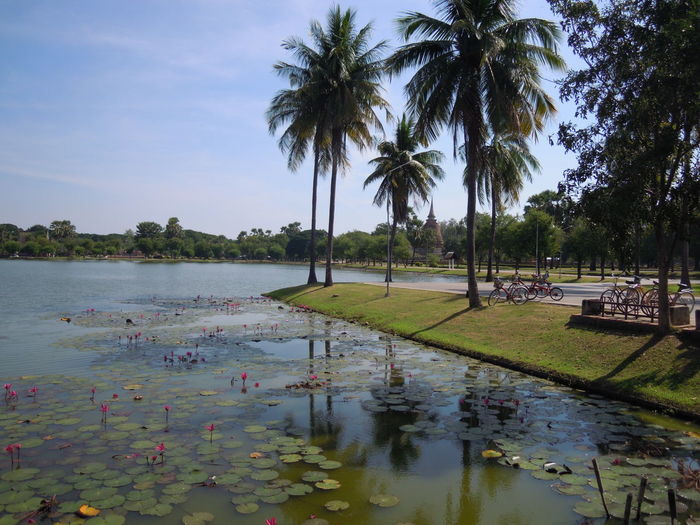 Thailand Sukhothai Historcal Ruins Old Temple Historic Park Buddist Temple Meditation Sunny Days Stupa Pagoda Travelling Backpacker Calm Scene Landscape EyeEm Selects Palm Tree Water Reflections Lotus Flower Shadow And Light Plant Tranquility Tropical Climate Floating On Water Lake View