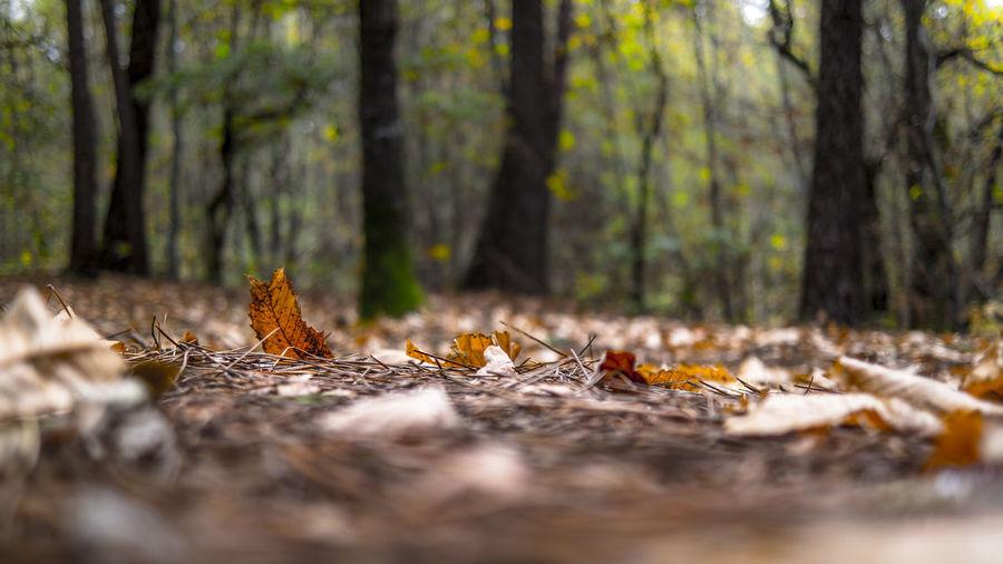 Fallen leaves on tree trunk in forest