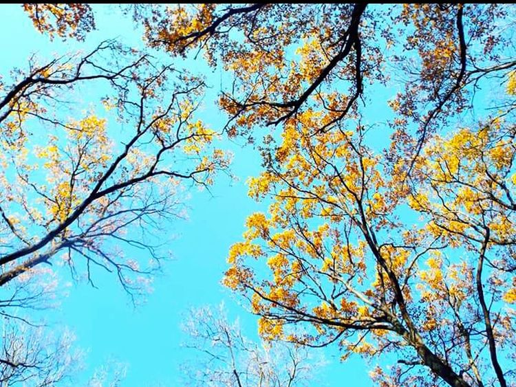 Autumn Beautifulday Yellow Trees Bluesky Coloroflife