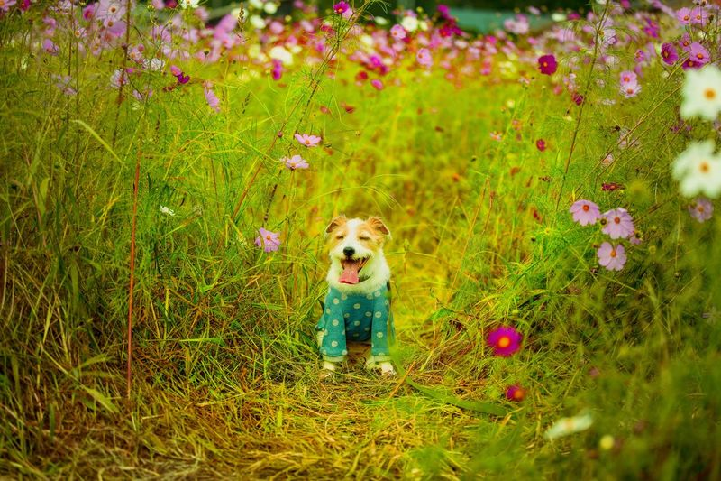 Portrait of dog with flowers on grass