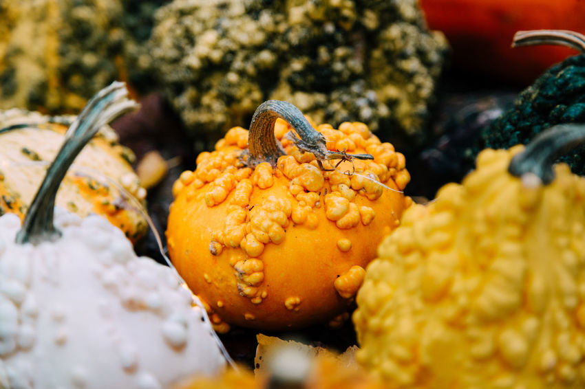 Beauty In Nature Close-up Cold Temperature Day Focus On Foreground Food Food And Drink Freshness Fruit Growth Healthy Eating Marine Nature No People Orange Color Outdoors Plant Selective Focus Temptation Wellbeing Winter Yellow