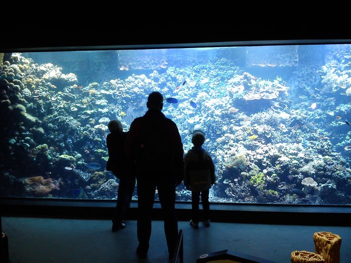 Silhouette People Watching Adult Aquarium Indoors  Sea Life Family Boys Children Aquarium Life Miles Away Zoo Rostock TCPM BYOPaper! Let's Go. Together.
