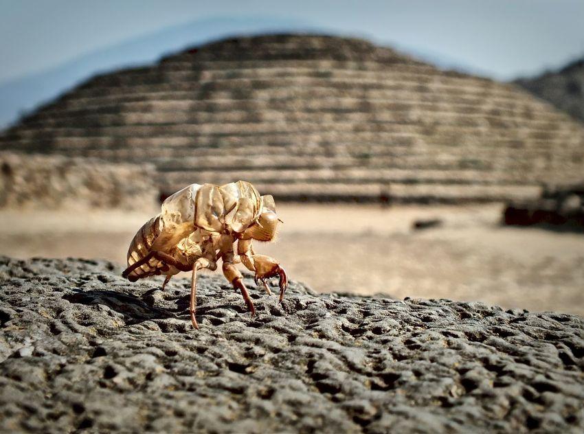 Insecto Renovación Cascara Ruinas Photo By Agustín Orozco Díaz - 2017