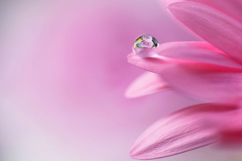 Macro shot of water drop on pink flower petal