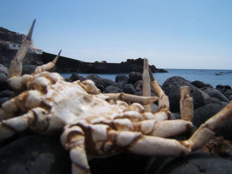 Cadaver Bones Canary Islands La Palma, Canarias Beach Crap Death Animal Sea Sea And Sky Sky Bones Canary Islands La Palma, Canarias Beach Crap Death Animal Sea Sea And Sky Sky