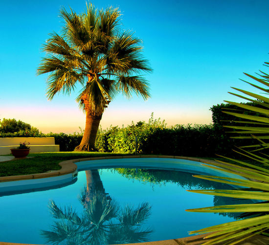 palm EyeEm Gallery Palm Tree The Great Outdoors - 2017 EyeEm Awards WeekOnEyeEm Beauty In Nature Blue Clear Sky Day Nature Newoneyeem No People Outdoors Palm Tree Reflection Scenics Sky Swimming Pool Tranquil Scene Tranquility Tree Tree Trunk Water Week On Eyeem EyeEmNewHere