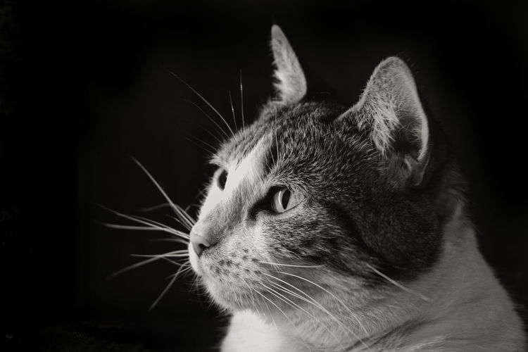 A ray of light in a dark place Newtonpetography EyeEm Best Shots EyeEm Gallery EyeEm Best Edits EyeEm Best Shots - Black + White Tabby Cat Kitten Animal Eye Cat