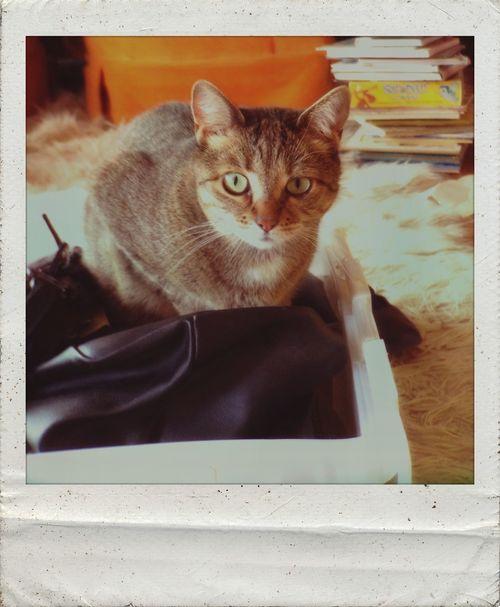 Polamatic Cat♡ Enjoying Life