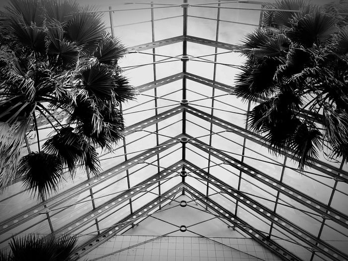 Monochrome Photography Low Angle View Indoors  Architecture Palm Tree Transparent Growth Built Structure Glass - Material Ceiling Tall - High Glass Modern Day Sky No People Architectural Feature Palm Frond Harare Zimbabwe 🇿🇼 Welcome To Black The Architect - 2017 EyeEm Awards
