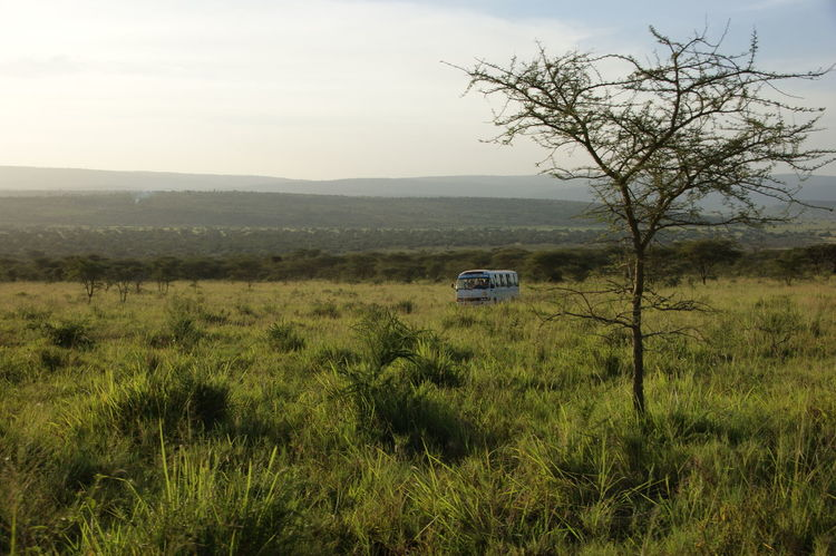 Adventure Akagera Bus Green Landscape Late Afternoon Minibus Outdoors Rwanda Safari Steppe Tree