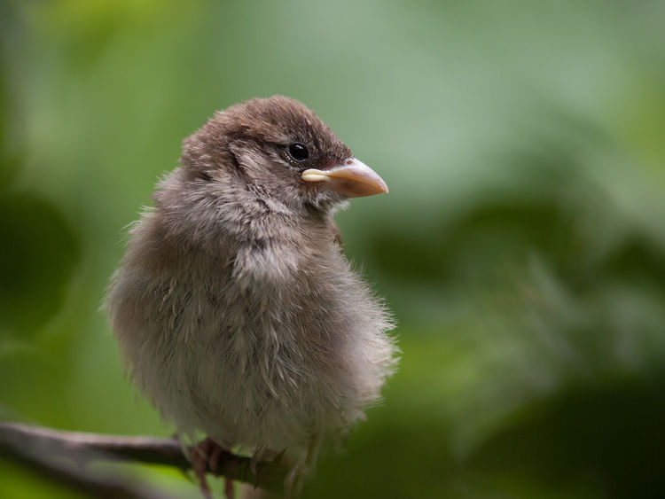 Animal Themes Beauty In Nature Bird Close-up Nature No People Selective Focus Sparrow Nature's Diversities