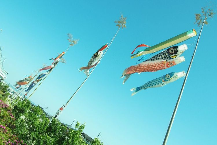 屋根よーりた〜か〜い🎏毎年5月はこれ撮るのが楽しみ(*´꒳`*) Photo Japan