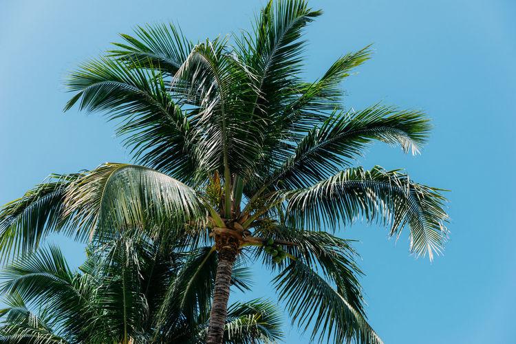 Palm Tree Blue