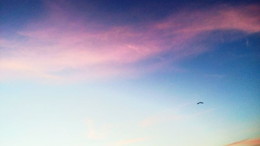 To those who can't make out: that black thing is an eagle 😁 Morning Sky Red Tint