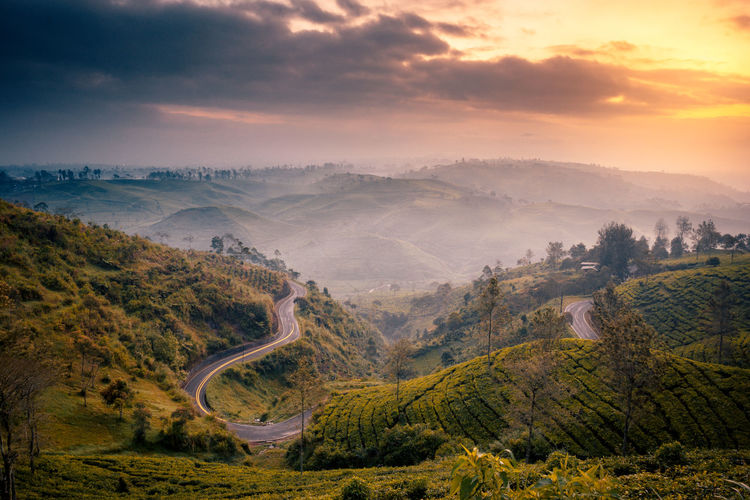 beautiful sunrise tea plantation landscape at bandung! Fog Outdoors Rolling Landscape High Angle View Road Non-urban Scene Aerial View No People Sunset Tranquility Tree Plant Beauty In Nature Tranquil Scene Environment Cloud - Sky Nature Mountain Scenics - Nature Landscape Sky Land