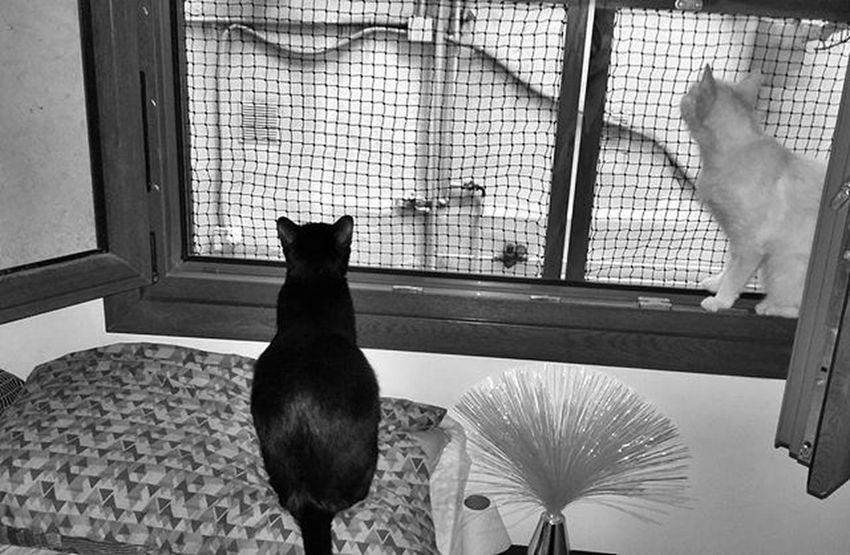 A por un nuevo día Bnw Blackandwhite Excellent_cats Excellent_kitten Cats Cat Catlover Catsofintagram Kittensofinstagram Kitty Meow Meowbox Meow_beauties Bestmeow Bestcats_oftheworld Topcatphoto Catstagram Cute Instacat_meows Catlover BLackCat Whitecat Proyectonoa Webstagram Tagsforlikes photooftheday picoftheday all_shots like4like instagood gato proyectonoa