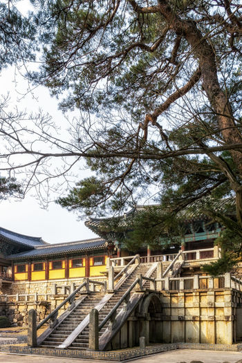 cheongungyo and baegungyo in bulguksa temple taken during winter. The staircase leads to the main entrance of the temple hallway Bulguksa Temple Entrance Gyeongju Korea Korean Korean Traditional Architecture Stairs UNESCO World Heritage Site Architecture Baegungyo Building Exterior Built Structure Bulguksa Cheongungyo Day Kyonju Low Angle View Nature No People Outdoors Pine Tree Sky Temple Tree Unesco