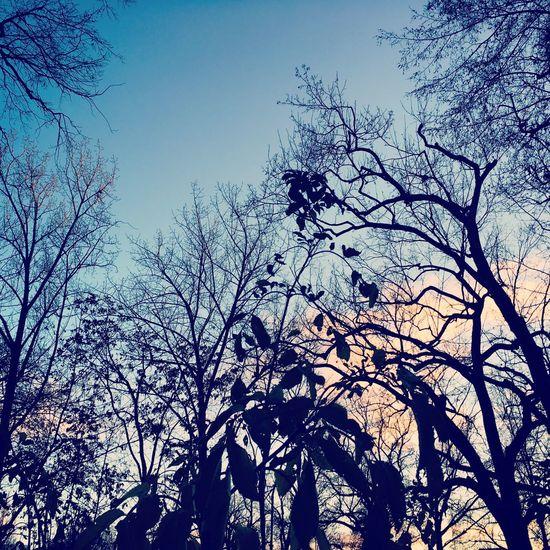 Berlin Tree Friedrichshain Sunset Park
