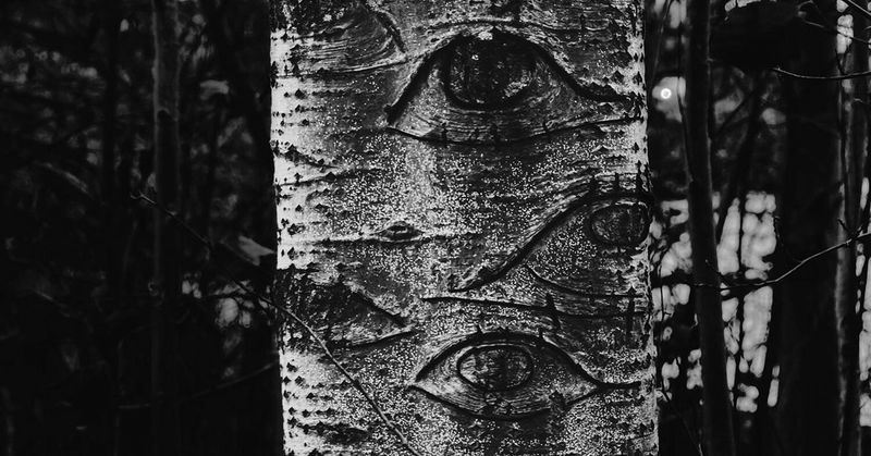 Be. Ready. Mother Earth and her eyes. Tree Trunk Textured  Tree No People Wood - Material Day Close-up Outdoors Bark Nature Growth Blackandwhite EyeEmNewHere