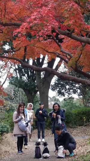 Schnauzers Schnauzer Dogs Pets Animals Walkies Guy With Dogs Posing Dogs Posing For The Camera Showa Kinen Park Nature Streetphotography Japanstreetphotography Japanautumn2016 Japannov2016 Japan The Colours Of Nature The Colours Of Autumn Maple Tree