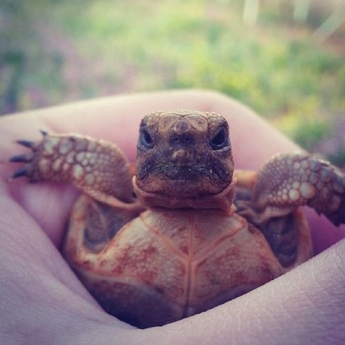The Angry Turtle. Turtle Angry Minecraf