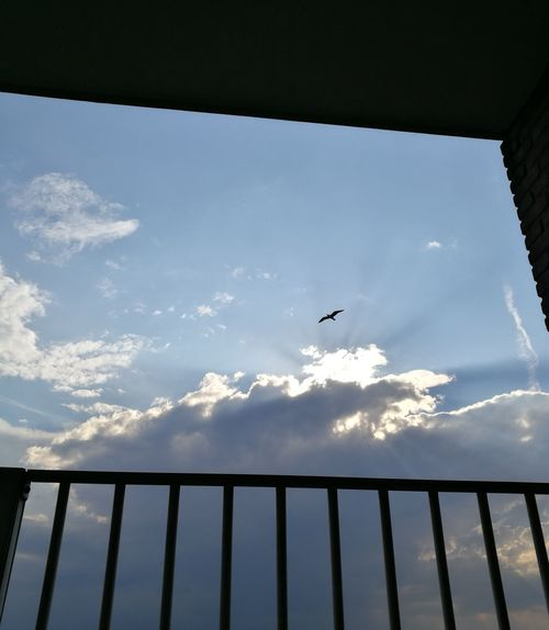 Bird Flying One Animal Cloud - Sky Sky Outdoors Day Nature Clounds  Rain Clouds View From The Balcony