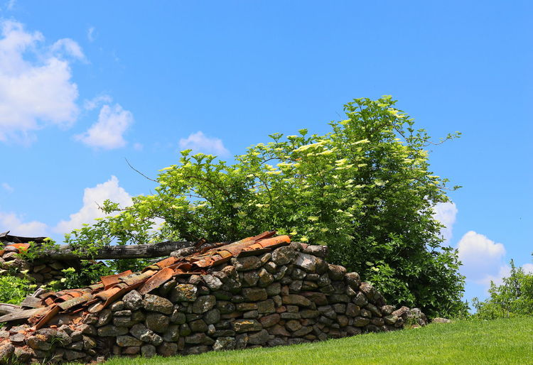 Stack of logs in forest against blue sky