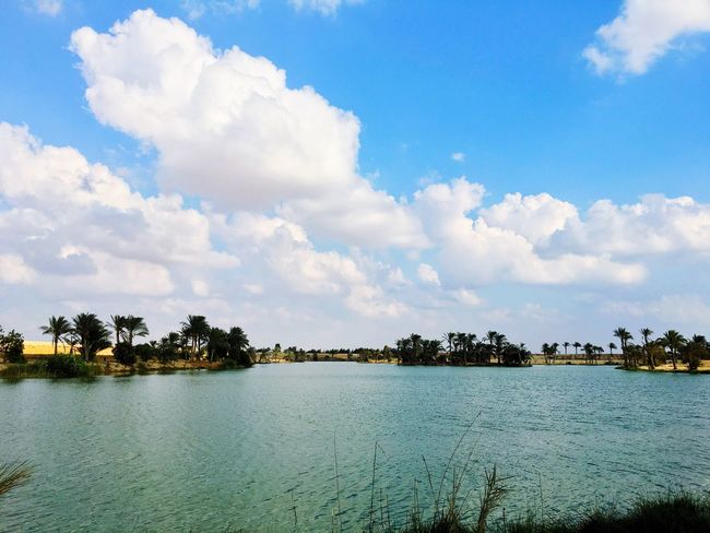 Beutiful  Water Nature Beauty In Nature Sky Scenics Tree No People Lake Growth Outdoors Day Cloud - Sky Waterfront Beauty In Nature Egypt Lake View Ismailia The Great Outdoors