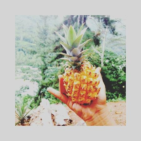 🍍 A l l C u t e 🍍 Hanglose Pineapple Littlepineapple TropicalFruit Tahiti Pyf Pineapple🍍 Pineapples Inthemountains Niceday EyeEm Gallery Eyeempicoftheday
