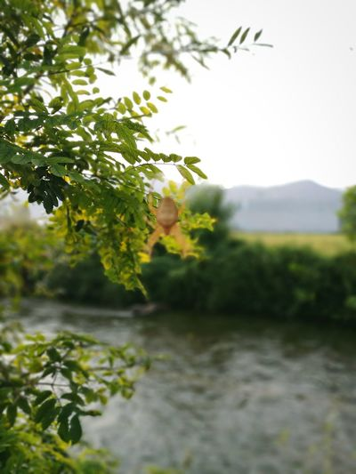 Leaf Tree Focus On Foreground Plant Green Color Growth Nature Day Tranquility Scenics Beauty In Nature Green Non-urban Scene Waterfront No People Outdoors Sky Freshness Tranquil Scene Branch Spider