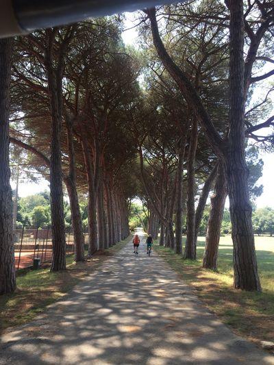 Activities Leisure Activity Men Real People Road Tree Treelined Two People Women