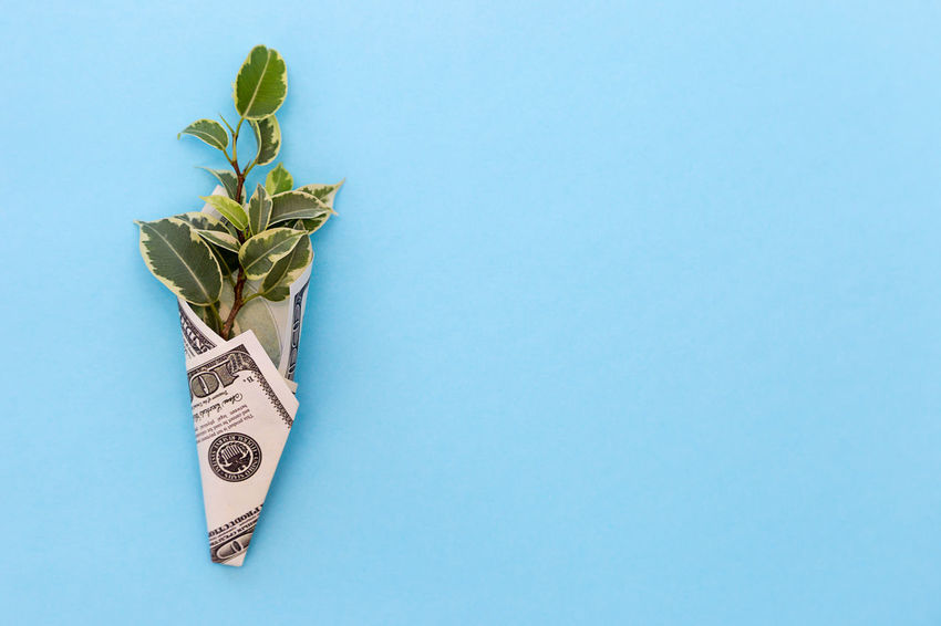 a green plant is wrapped in a hundred-dollar bill on a colored background Blue Sprout Background For Text Business Life Plant Prosperity Revenue Rich Wages Wrap Abundance Background Colorful Copy Space Dollar Dollars Earnings Finance Financial Income Investment Leaf Money Profit Success Wealth Wrapped Leaves Making Money
