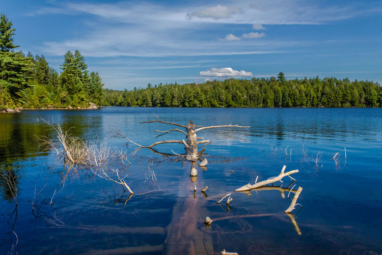 Postcard from Smoke Lake Algonquin Park Algonquin Provincial Park Autumn Beauty In Nature Canada Forest Herbst Indian Summer Kanada Lake Natur Nature Nature Nipissing No People Ontario Postcard Picture Sky Smoke Lake Tree Water