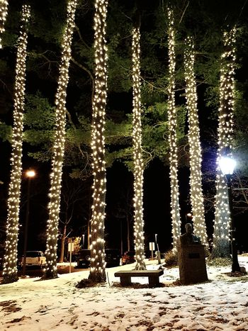 Night Nightphotography L.L.Bean Celebration Christmas Decoration No People Snow Winter Tree Outdoors Cold Temperature Shades Of Winter The Graphic City