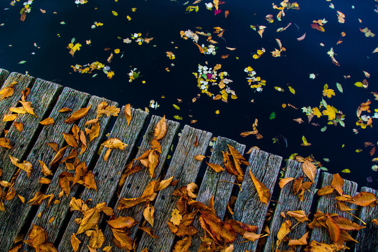 High angle view of maple leaves floating on lake