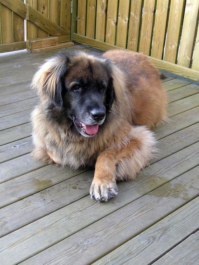 Dog Canine One