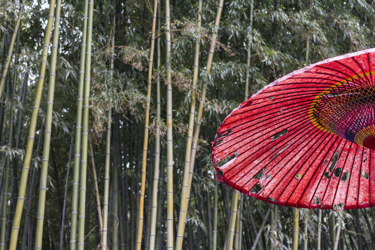 Umbrella Japan ASIA Beauty In Nature Beautiful Beautiful Nature Summer Spring Forest Feng Shui Garden Wood Meditation Bamboo Bamboo - Plant Material Green Nature Umbrella Red Rain Tree Focus On Foreground Tranquility Arashiyama Kyoto