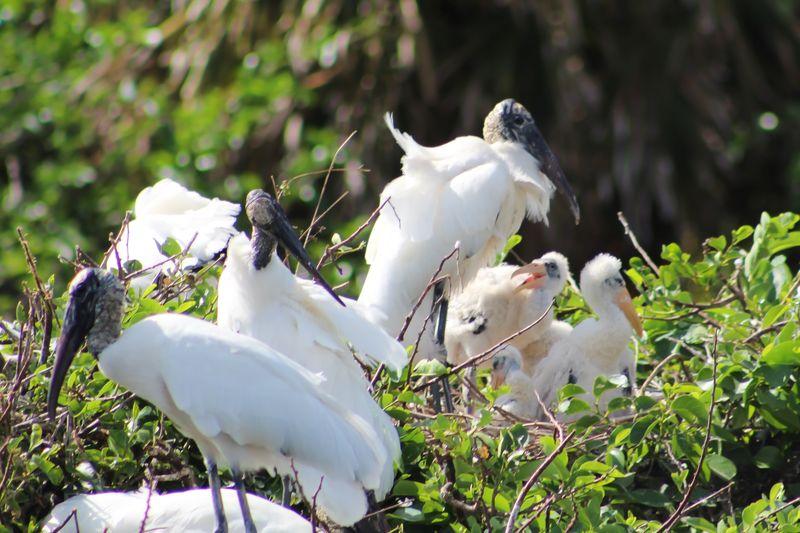 White birds on a plant