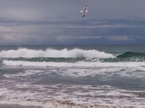 Nexus5photography Nexus5 Noedit NofilterNoedit Nofilter Notneeded [a:7671816] NoEditNoFilter No Edit / No Filter No Edit/no Filter Sea Wind Waves Waves Crashing Onde Schizzi Wavw Splashing Wavessplashing Wavesplashing Wavecrashing Seagull Gabbiano