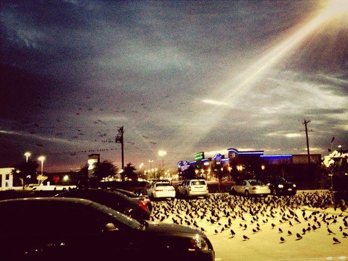 Birds UrbanART
