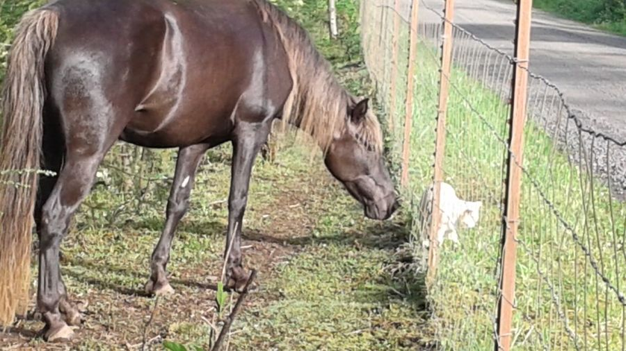 Animal Friends Animal Themes Fence Horse Horse And Cat Livestock No People Outdoors