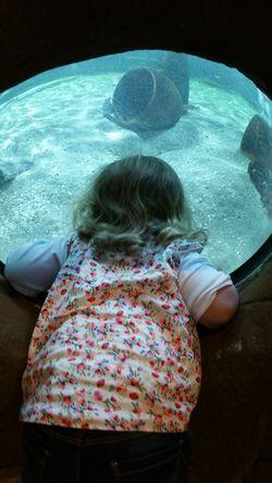 Close-up Leisure Activity Lifestyles Relaxation Water Aquarium Aquarium Life Sealifecentre Sealifeaquarium Child Samsung Galaxy Note 4 Fun Water Water Bubble